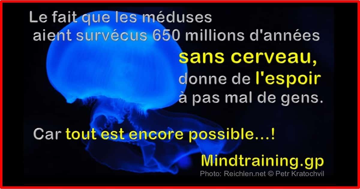 Humour: Le fait que des méduses aient survécus 650 millions d'années sans cerveau donne de l'espoir à pas mal de gens.