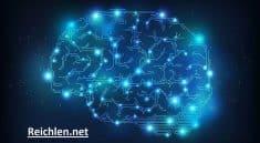 Cerveau Anatomie Rayons-X