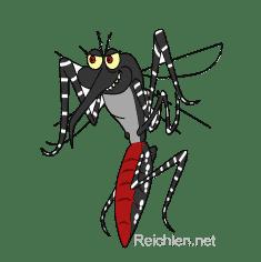 """Moustique Aedes Aegypti ou Albopictus, dit """"moustique tigre"""""""